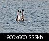 Kliknij obrazek, aby uzyskać większą wersję  Nazwa:P4288457.jpg Wyświetleń:271 Rozmiar:332,8 KB ID:87226