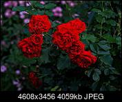 Kliknij obrazek, aby uzyskać większą wersję  Nazwa:P6270272.jpg Wyświetleń:43 Rozmiar:3,96 MB ID:224241