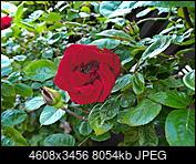 Kliknij obrazek, aby uzyskać większą wersję  Nazwa:P6130050.jpg Wyświetleń:34 Rozmiar:7,87 MB ID:224244