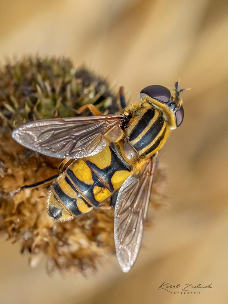 Nazwa:  owady5n.jpg Wyświetleń: 59 Rozmiar:  512,7 KB