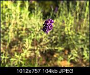 Kliknij obrazek, aby uzyskać większą wersję  Nazwa:P9220006-1.jpg Wyświetleń:59 Rozmiar:104,2 KB ID:217892