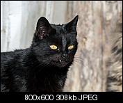 Kliknij obrazek, aby uzyskać większą wersję  Nazwa:p1330071.jpg Wyświetleń:100 Rozmiar:307,8 KB ID:140731