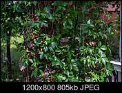 Kliknij obrazek, aby uzyskać większą wersję  Nazwa:385.jpg Wyświetleń:77 Rozmiar:805,3 KB ID:205472