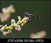 Kliknij obrazek, aby uzyskać większą wersję  Nazwa:P7040477.JPG Wyświetleń:40 Rozmiar:2,94 MB ID:235304