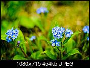 Kliknij obrazek, aby uzyskać większą wersję  Nazwa:_DSC2680.jpg Wyświetleń:17 Rozmiar:454,2 KB ID:215658