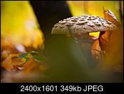 Kliknij obrazek, aby uzyskać większą wersję  Nazwa:P2690222.jpg Wyświetleń:32 Rozmiar:349,4 KB ID:217264