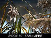 Kliknij obrazek, aby uzyskać większą wersję  Nazwa:P2690334.jpg Wyświetleń:33 Rozmiar:671,7 KB ID:217268