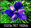 Kliknij obrazek, aby uzyskać większą wersję  Nazwa:kielich_rosy.jpg Wyświetleń:71 Rozmiar:192,2 KB ID:109174