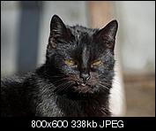 Kliknij obrazek, aby uzyskać większą wersję  Nazwa:p1330050.jpg Wyświetleń:123 Rozmiar:338,3 KB ID:140719