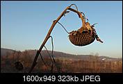 Kliknij obrazek, aby uzyskać większą wersję  Nazwa:PC315048.JPG Wyświetleń:86 Rozmiar:322,8 KB ID:186076